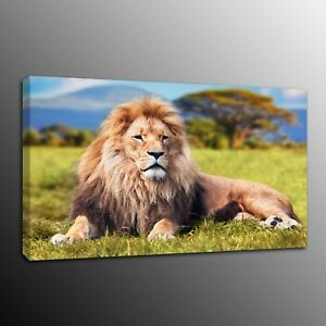 Canvas Print Painting Wall Art Modern Animals Lion Picture Home Decor Framed