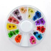 12 Colors Real Dried Flowers Nail Art Decoration DIY Tips Decor Manicure Wheel ~