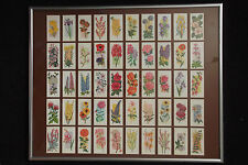 FLOWERS ALL YEAR ROUND, SET CARRERAS 'BLACK CAT' CIG. CARDS FROM 1977 IN FRAME