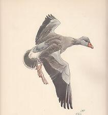 1937 BIRD PRINT ~ GREY LAG GOOSE