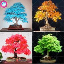 Japanese Bonsai Maple Tree 10 Pcs Seeds Mini Plants Garden Free Shipping New X S