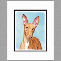 "Ibizan Hound /""Rules/"" Dog Art Print Matted"