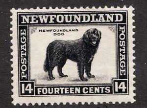 #194 - Newfoundlander Dog - 14 Cents - 1932 - MNH - Superfleas - cv$7.50