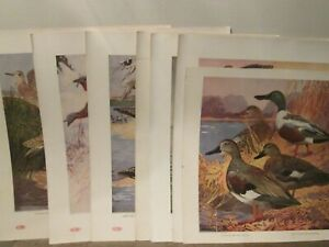 1917 DuPont Powders Our American Game Birds 9 Lithos & Box  Lynn Bogue Hunt