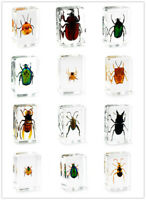 Various Insect Specimen in clear Resin Paperweight Specimen