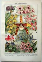 New Houseplants - Original 1912 Chromo-Lithograph by Meyers. Beautiful Antique