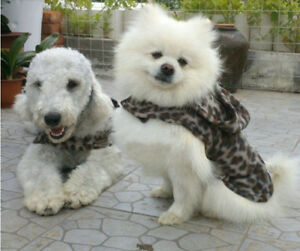 New Fashion Pet Dog Hoodies Clothing Puppy Coat Clothes Apparel Camouflage