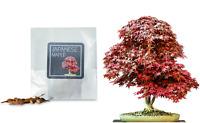 Maple Acer☆ Yunnan Chinese red ☆x4 Tree Sapling Bundle#1 Japanese black
