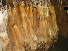 """Tanned Red Fox Hides """" FRESH FROM TANNERY """" Fur Coats Trapping Furs #2 s"""