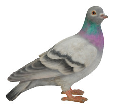 Vivid Arts - REAL LIFE BIRDS - Pigeon British Bird