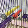 Creative Pet Bird Stand Chew Toy Parrot Paw Grinding Perches for Budgie Cage New