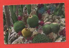 Monaco - Le jardin exotique  (C903)