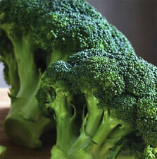 ORGANIC Broccoli WALTHAM Fresh 100 Seeds NON -GMO Heirloom Clean seed