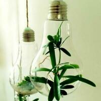 Light Bulbs Hanging Plant Terrarium Glass Vase Succulent Planter Pot Flower F0V3