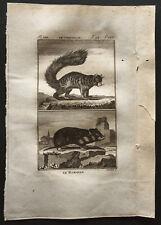 1799 - Buffon - Le hamster, le coqualin - Gravure zoologie