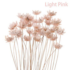 Home Decor Diy Crafts Dried Flowers Small Star Floral Bouquets Mini Daisy