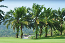 Digital Picture Image Photo Wallpaper JPG Palms on golf course Nature
