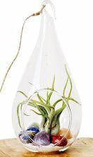 """Chakra Crystal Healing Air Plant Terrarium Kit / 7.5"""" Clear Glass Hanging Terrar"""