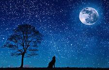 "11x17 METALLIC Photograph ""Wolf Bark At The Moon"" Picture Wall Art Decor Rain"