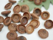 100 Large17mm-19mm opening Dried natural acorn cups,Real acorn cups Fall decor