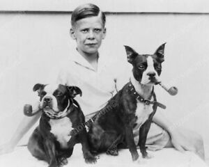 Boy With Smoking Boston Terrier Dogs! Vintage 8x10 Photography Reprint