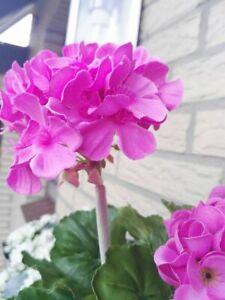 Kunstblume Geranie 37cm Hell Rosa Kunstpflanze Aussenbereich Seidenblume Blätter