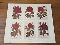 Vintage Rose Art Botanical Art Print Types of Roses Flower Chart