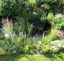 lot demarrage plantes bassin en pots 7 sortes vivaces + nenuphar + oxygenantes
