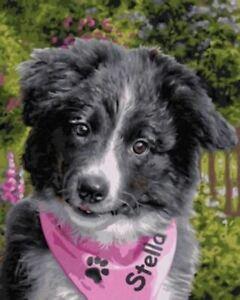 Schipper: Border Collie Puppy
