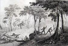 JAGD AUF JAGUARE CAÇA DE ONÇAS 1838 BRASILIEN BRASIL URWALD CHASSE DE JAGUAR
