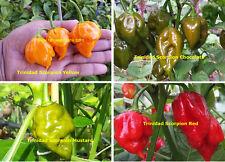 Ultimate Trinidad Scorpion Chilli Collection - 40+ Australian Grown Seeds
