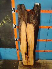 """#8910  2 1/4"""" THICK spalted maple live edge slab"""