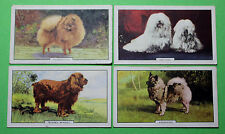 Cigarette Card Gallaher Ltd Dogs Second Series of 48 1938 Very Good Cond 87