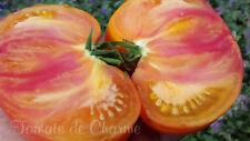 10 graines de tomate rare Lucky Cross saveur fabuleuse! Le TOP! méth.bio