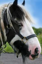 Gypsy Cob Horse Journal : Lined Notebook/Diary, Paperback by Horse Breeds (Co.