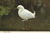 "*Bird Postcard-""The Snowy Egret"" -Conservatory-Aviary, W Park/"
