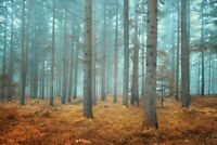 A1 | Misty Forest Poster Art Print 60 x 90cm 180gsm Trees Nature Fog Gift #8721