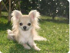 Mauspad Edition Colibri: Chihuahua- klein und flauschig - schönes Porträt