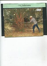 P166 # MALAYSIA USED PICTURE POST CARD * OIL PALM PLANTATION