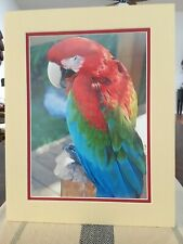 Photo of multi colored parrot
