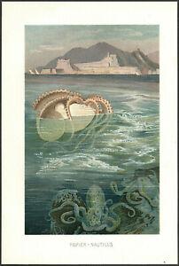 SEA OCEAN PAPER NAUTILUS 1895 vintage original Chromolithograph