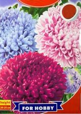 Seeds of Aster Chinese Krestella mix Seeds 0,3 g Annual flower а�тра