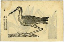Antique Print-BIRD-OYSTERCATCHER-STILT-ALDROVANDI-Coriolano-1599