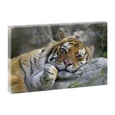 Große Deko-Bilder & -Drucke auf Leinwand mit Tier-Motiv