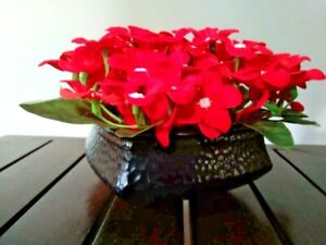 Artificial velvet Red Flowers with vase Home and Office Decoration