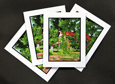 Last Days of the Tobacco Barn, Amos Park - Note Cards