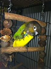 Bird Fashion Yellow Green Orange Mix Flight Suit For outside cage Small
