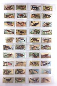 Vintage British Birds Imperial Tobacco 40 Cards Incomplete Set Q008