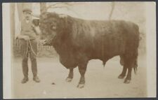 More details for the farmer proudly standing with his prize bull. vintage real photo postcard