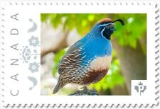 GAMBEL'S QUAIL EXOTIC BIRD Personalized Postage stamp MNH Canada 2018 p18-06sn05